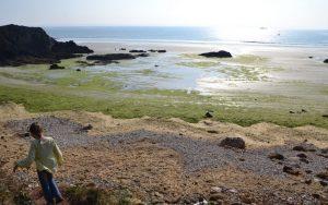 Les marées vertes, une histoire bretonne?